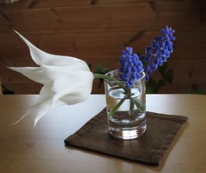 Tulip0501_2